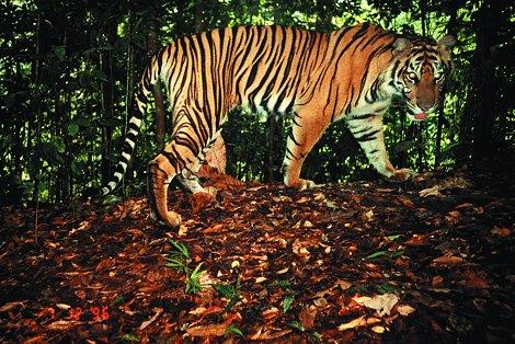 Lnvl naturarium affen 3 for Boden im regenwald